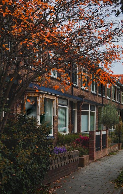 가을, 건물 외관, 건물 외장, 건축의 무료 스톡 사진