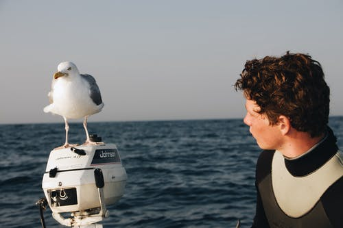 Man Looking at Bird Standing on Outboard Motor