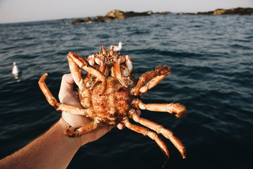 Hand  Holding Brown Crab