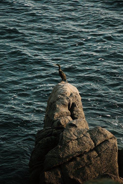 락, 물, 바다, 새의 무료 스톡 사진