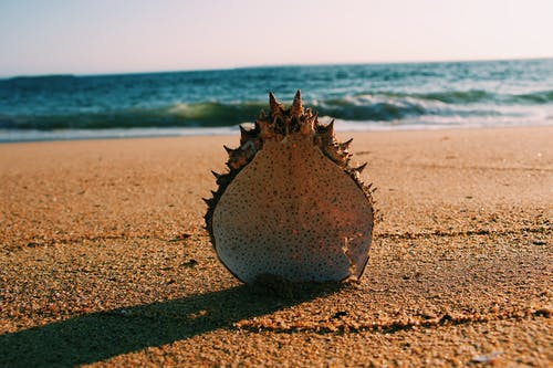 Shell on Shore