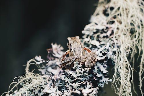 Immagine gratuita di anfibio, animale, esotico, fauna selvatica