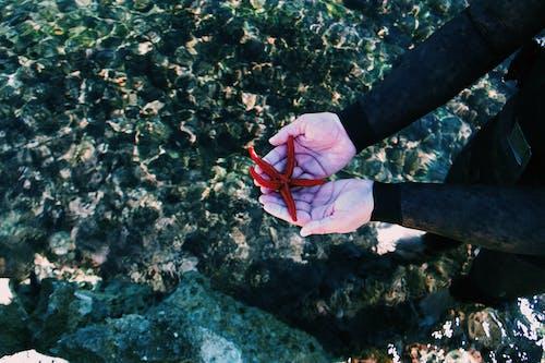 Бесплатное стоковое фото с вода, водные животные, держать, морская звезда