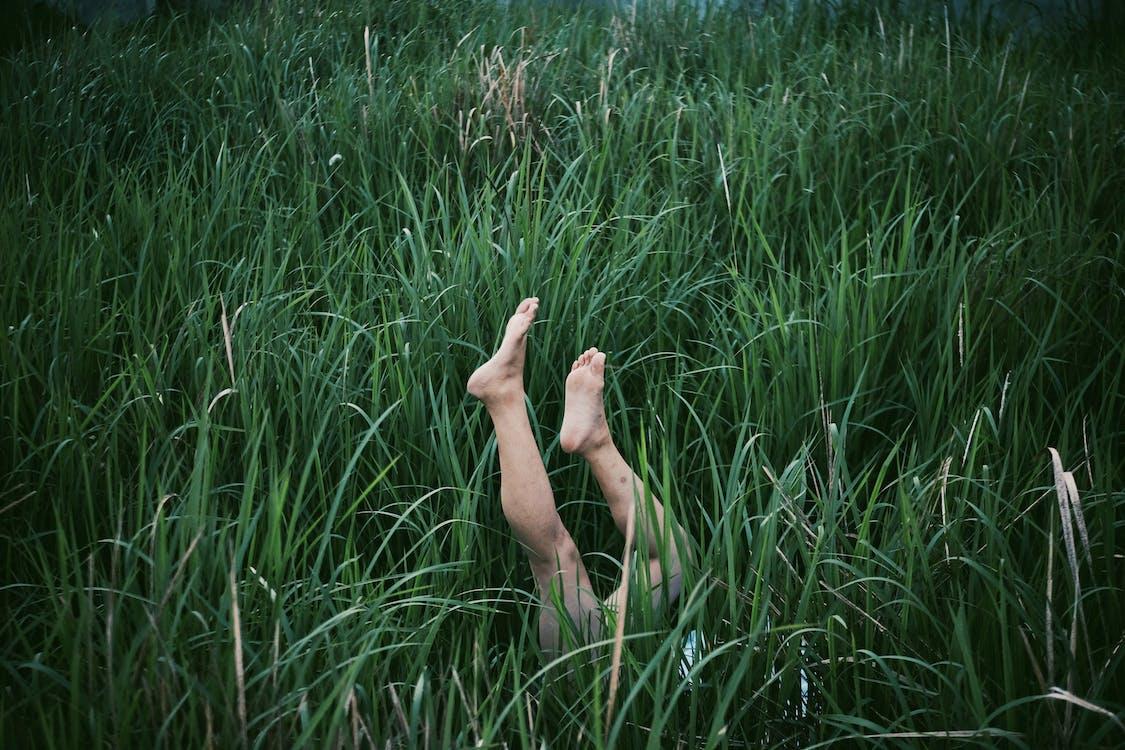 chodidla, listy trávy, nohy