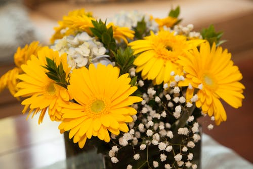 Free stock photo of beautiful flowers, summer flower, yellow flowers