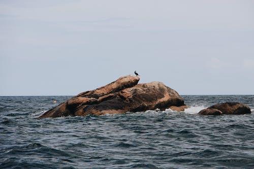 地平線, 地質構造, 岩層, 岩石 的 免费素材照片