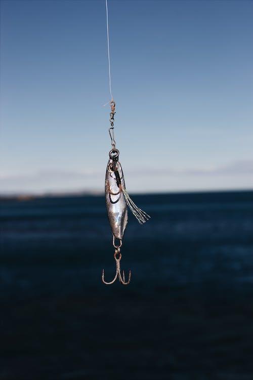 Gratis stockfoto met aas, haak, touw, vissen
