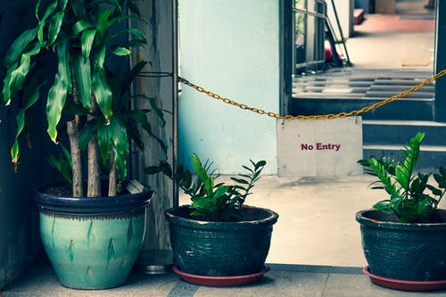 Three Green-leafed Plants On Colored Planters Indoors Behind A No Entry Sign Hanging On A Chain