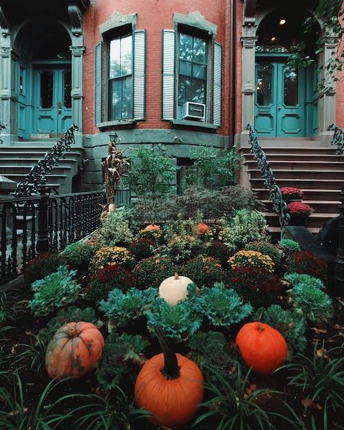 Free stock photo of fall, moody, overcast, pumpkin