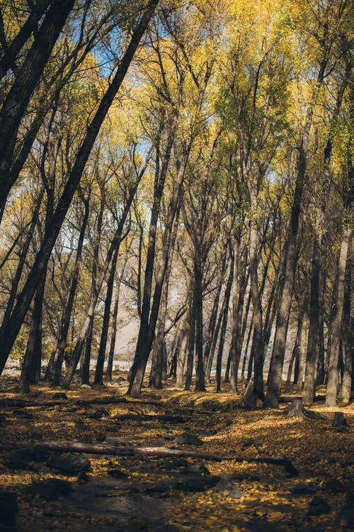 ağaçlar, arazi, gün ışığı, iz içeren Ücretsiz stok fotoğraf