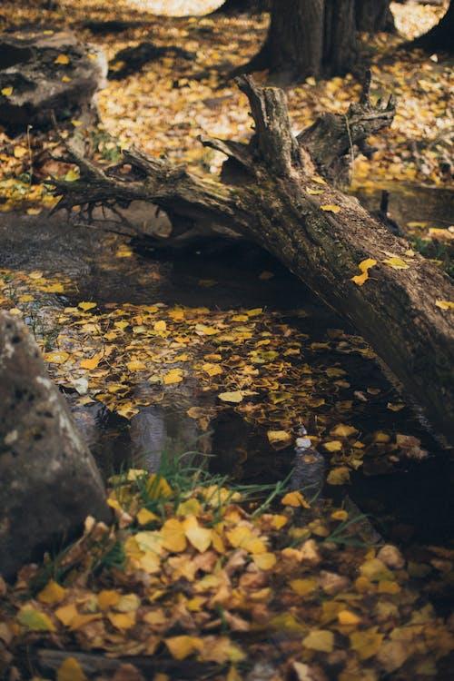 Ilmainen kuvapankkikuva tunnisteilla kuivat lehdet, lehdet, pudonneet lehdet, puun kuori