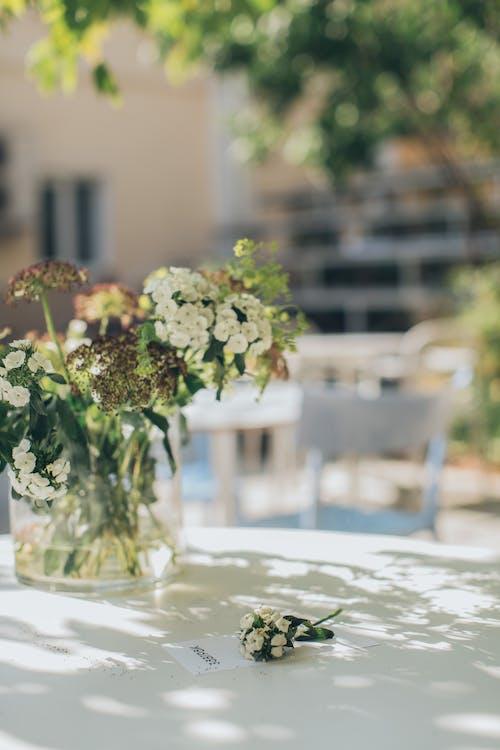 Foto stok gratis bejana, bunga-bunga, flora, meja