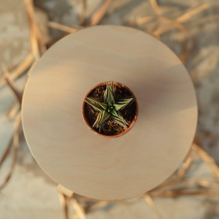 impianto, pianta, pianta grassa