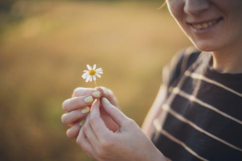 Ảnh lưu trữ miễn phí về cúc trắng, giữ, hoa cúc, mỉm cười
