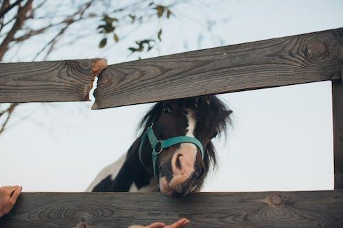 Fotos de stock gratuitas de animal, caballo, cerca, ganado