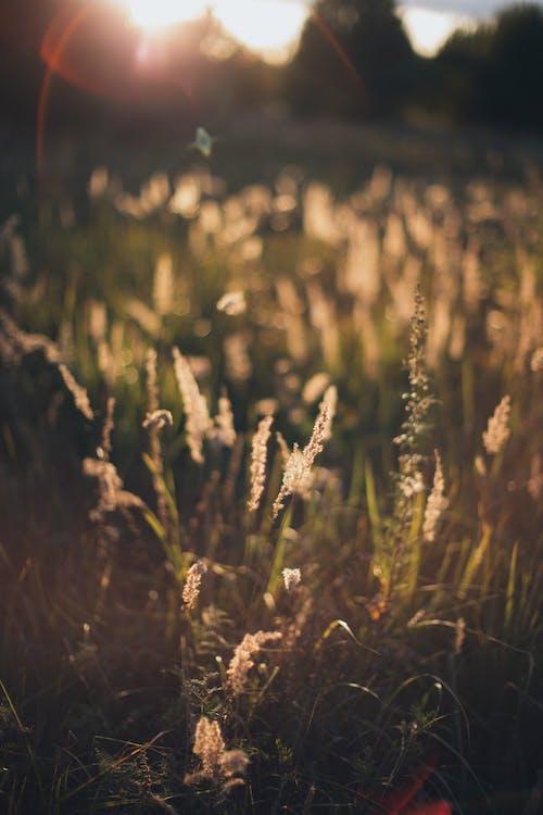 Gratis arkivbilde med åker, anlegg, gress, gressmark