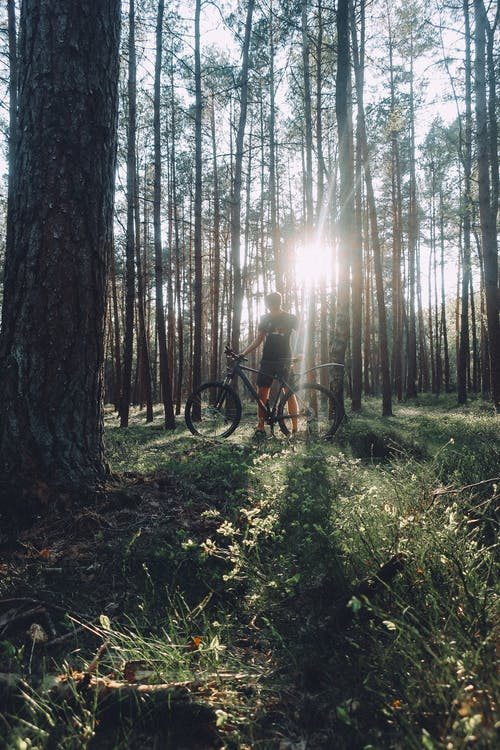 Δωρεάν στοκ φωτογραφιών με mountainbike, ενάντια στο φως, επιβίωση, ξύλα