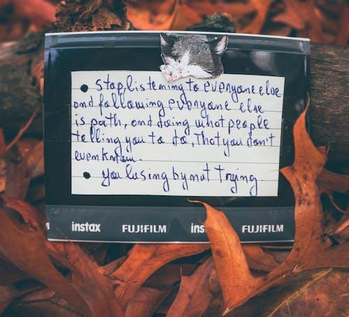 Foto d'estoc gratuïta de bosc de tardor, color tardor, fujifilm, fulles caigudes