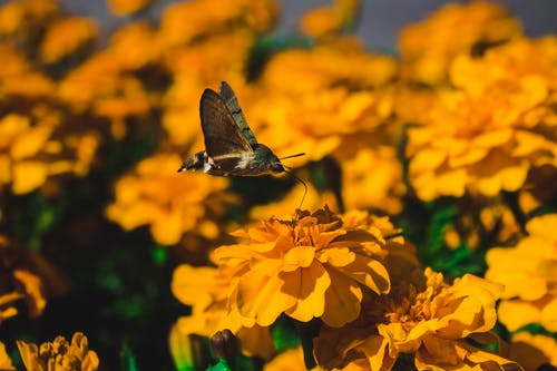 Selective Focus Photo of Butterfly on Yellow Flowers
