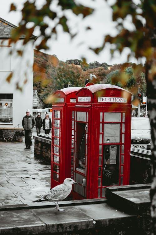 Darmowe zdjęcie z galerii z budka telefoniczna, fotografia uliczna, ludzie, mewa