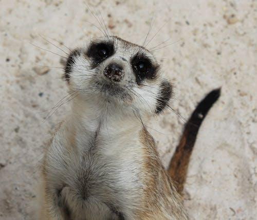 Free stock photo of animal, black eyes, cute, Hello