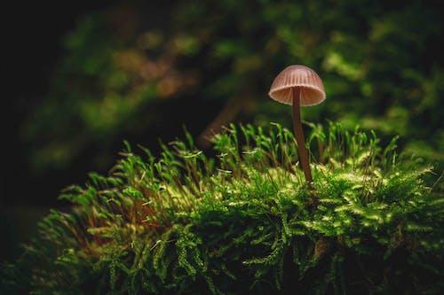 Gratis arkivbilde med hattsopp, makro, mose, skogssopp