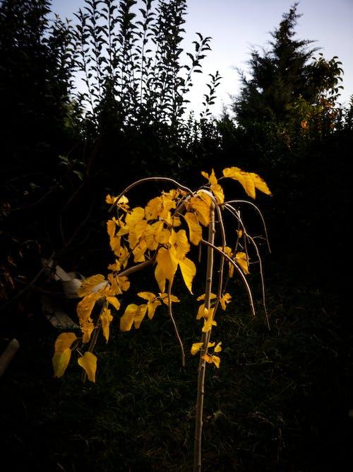 Δωρεάν στοκ φωτογραφιών με ali kawa karar, αμερικανικό πράσινο δέντρο βάτραχος, γυμνά δέντρα, μηλιά