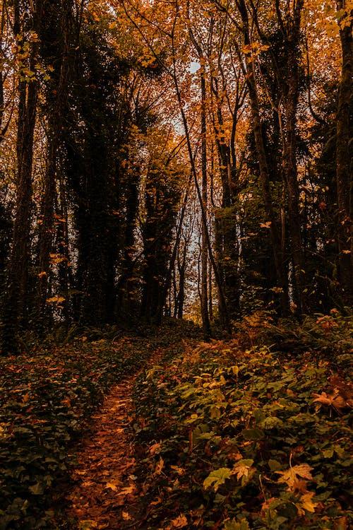 ağaçlar, güz, güz yaprakları, manzara içeren Ücretsiz stok fotoğraf
