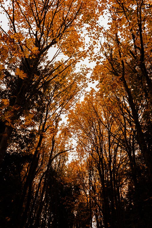 blader, falle, høst
