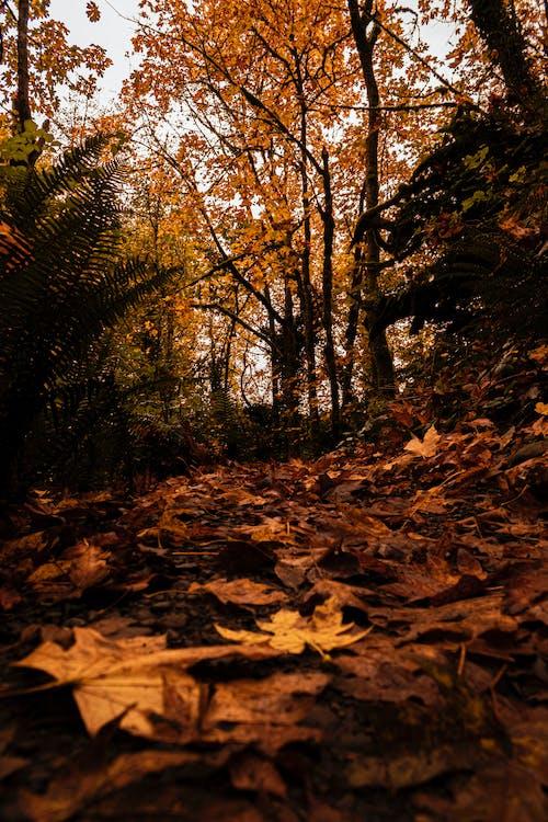 Бесплатное стоковое фото с деревья, листья, осенние листья, осень