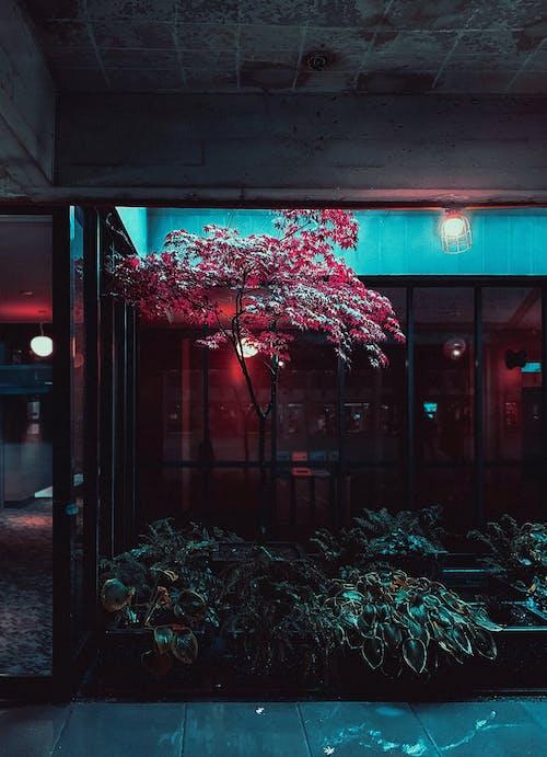 Ảnh lưu trữ miễn phí về ấm cúng, ánh sáng, căn nhà, cây xanh