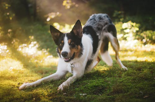 Photo Of Dog On Grass