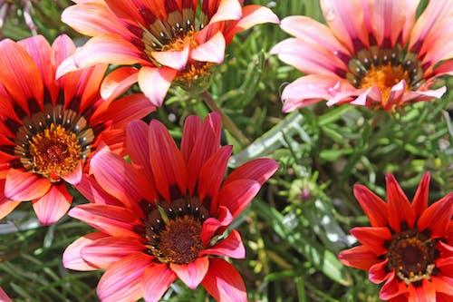 คลังภาพถ่ายฟรี ของ ดอกไม้ป่า, ดอกไม้สีชมพู