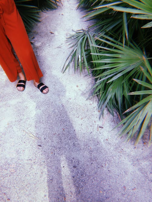 Person Standing  wearing Red Pants Beside Green Plant
