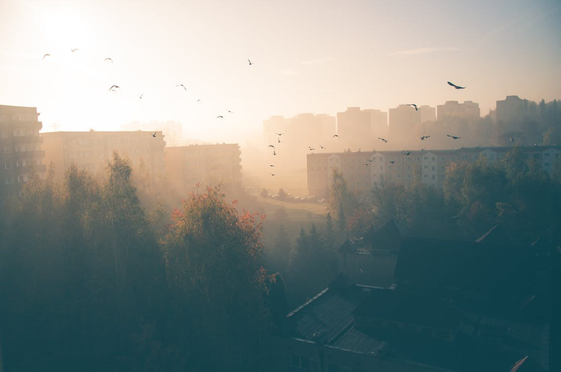 Silhouette Of A Flock Of Birds Flying Over Trees On A Hazy Day In The City