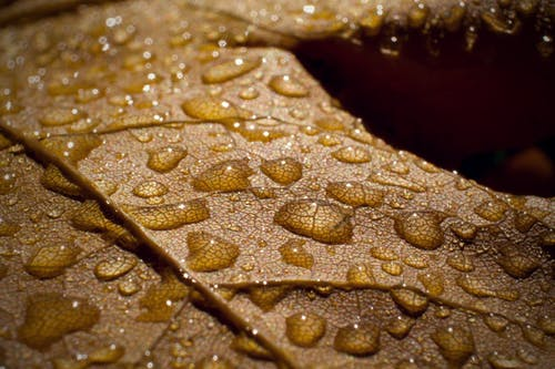 Free stock photo of after the rain, autumn, autumn mood