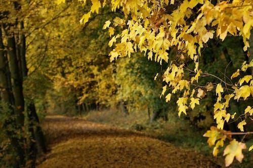 Free stock photo of autumn color, autumn forest, autumn mood