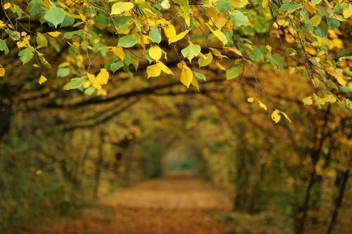 Free stock photo of autumn, autumn leaves, autumn mood, autumn road
