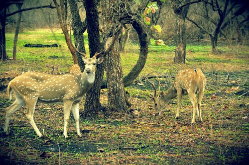 Free stock photo of deers, gir forest, gujrat, impala