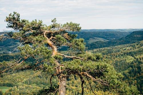 Δωρεάν στοκ φωτογραφιών με deutschland, Γερμανία, δέντρο, κλαδί