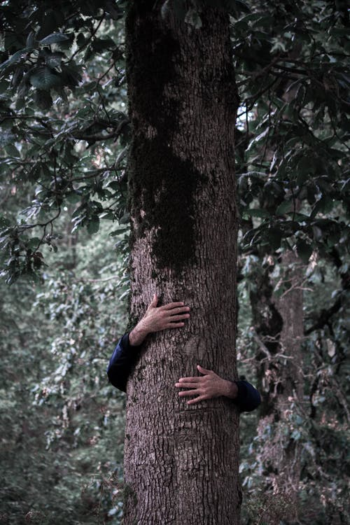 คลังภาพถ่ายฟรี ของ กอด, คน, เปลือกไม้