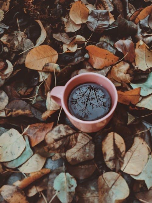 Darmowe zdjęcie z galerii z cappuccino, drink, dzień, espresso