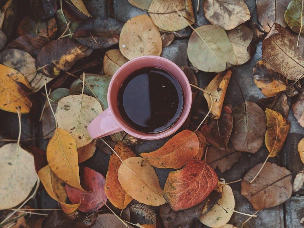 cappuccino, drink, dzień