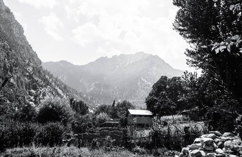 Greyscale Photography of Trees Beside Hut