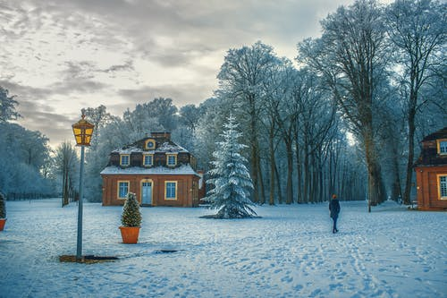 Gratis stockfoto met bevriezen, bevroren, bomen, bossen