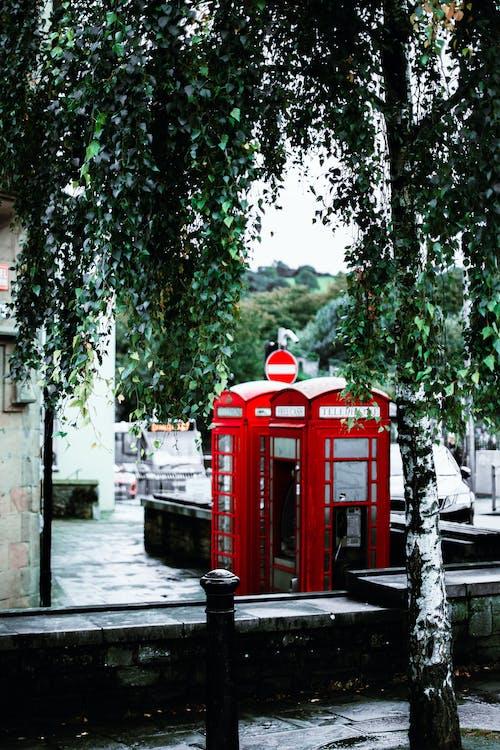 Foto profissional grátis de árvore, cabine telefônica, folhas, fotografia de rua