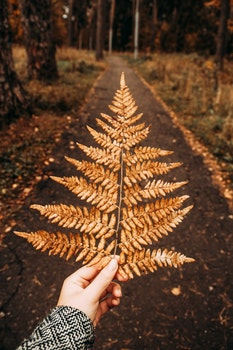 Photography of Person Holding Dry Fern Leaves
