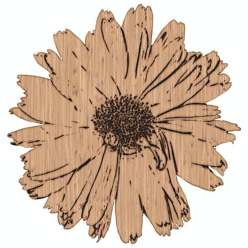 Free stock photo of dahlia, ebony, effect