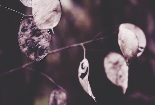 Fotobanka sbezplatnými fotkami na tému detailný záber, jeseň, jesenná farba, jesenná nálada