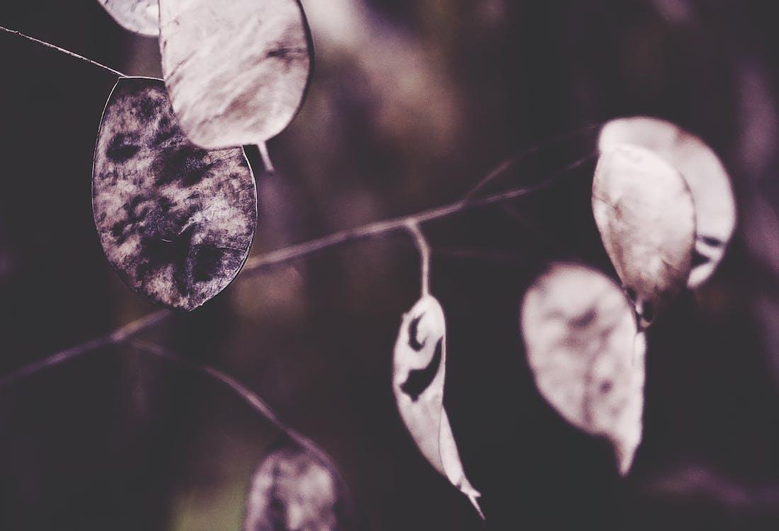 detailný záber, jeseň, jesenná farba